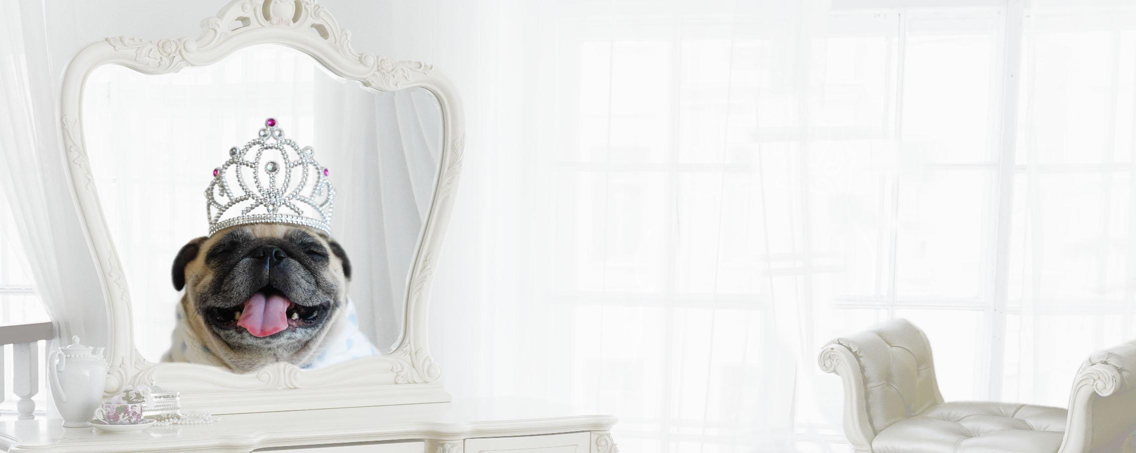 Pekinese (Hund) mit Krone in herrschaftlicher Umgebung als ein zentrales Bild-Slider-Motiv von FROG KING zur Aussage