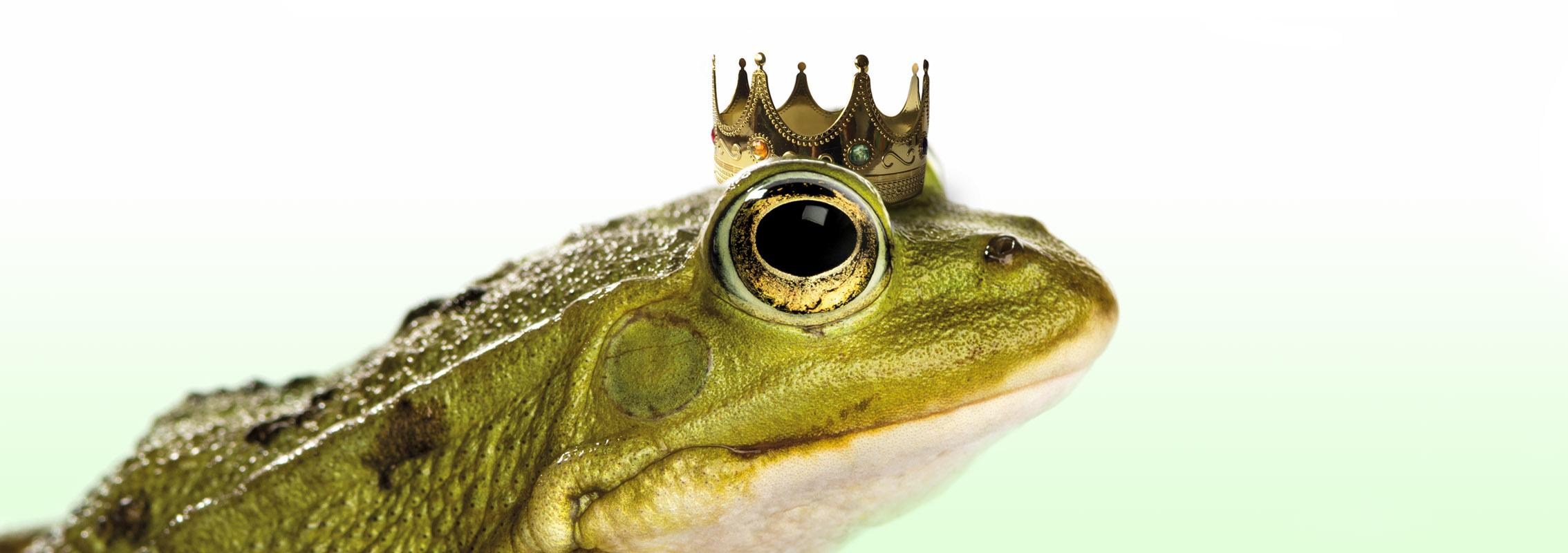 frog-king agentur motiv froschkoenig